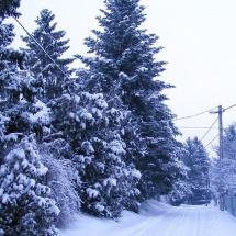 Nagyréde télen, Kecskesajt, Nagyrédei Kecskefarm